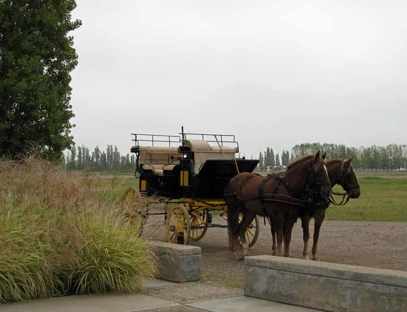 Horse-drawn carriage ride at Tapiz