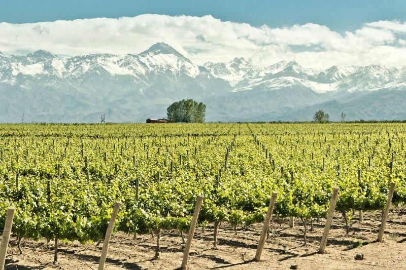 Vineyard and mountains around Mendoza