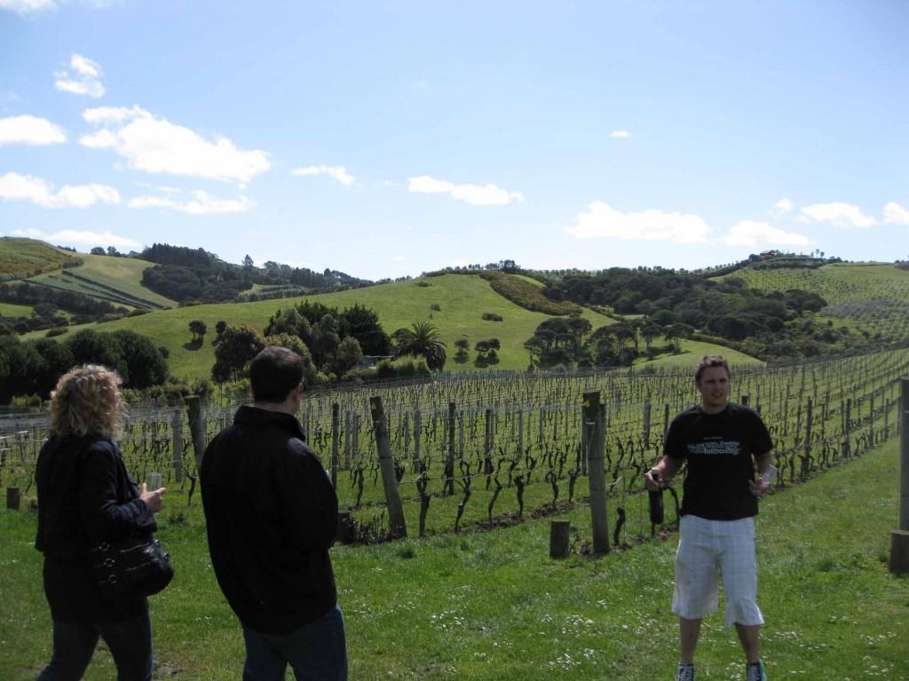 people looking at a vineyard
