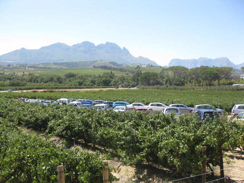 Stellenbosch's beautiful scenery