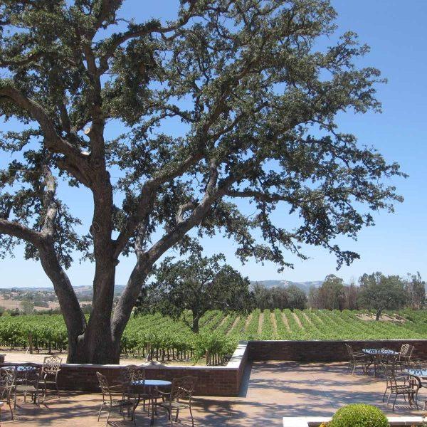 Eberle winery paso robles CA