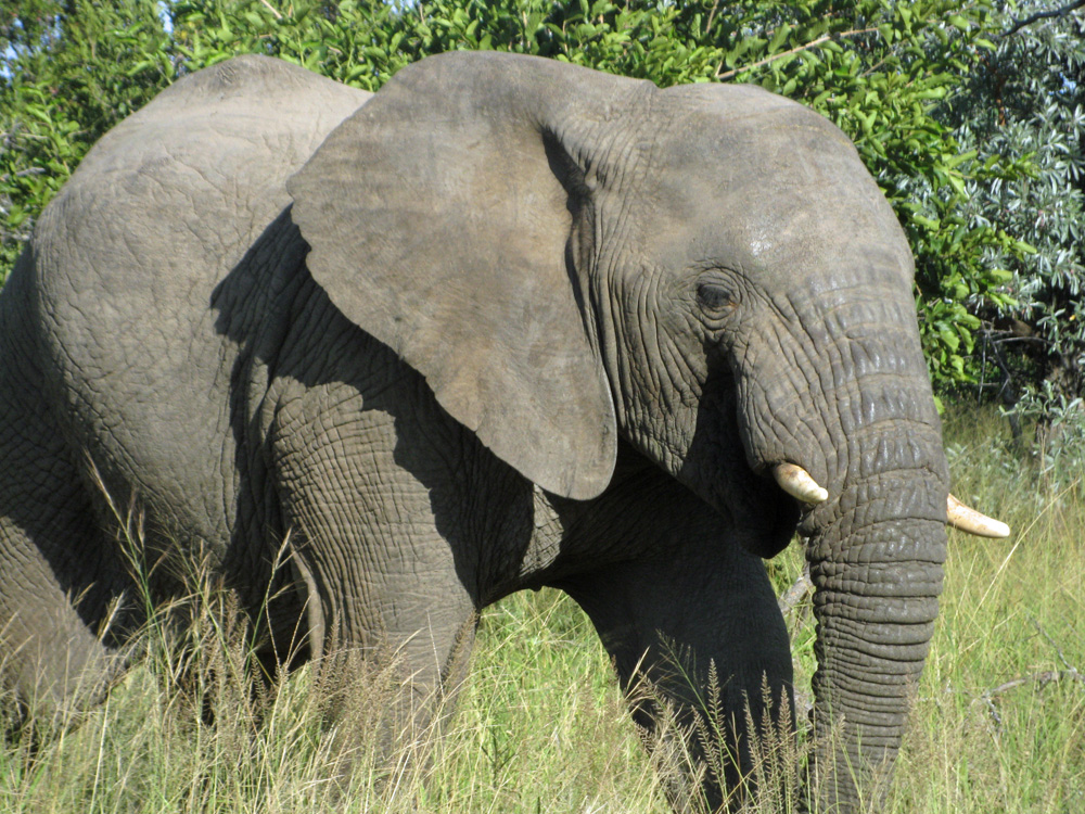 Up close encounter with an elephant