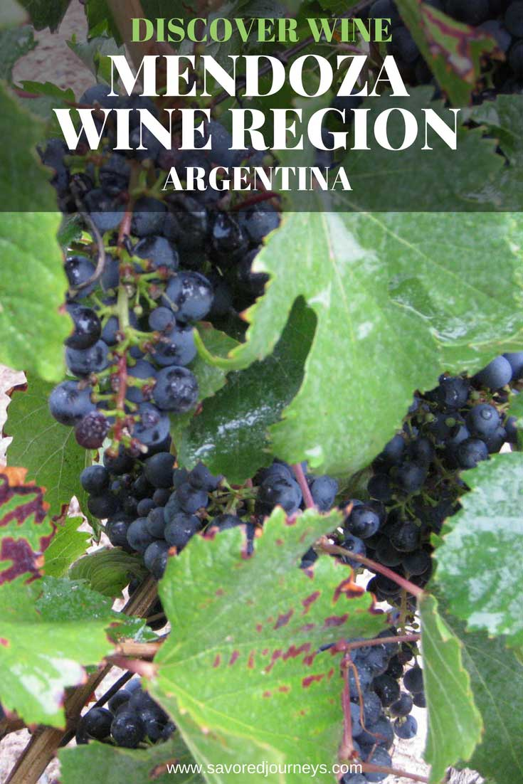 Discover the Mendoza wine regions in Argentina