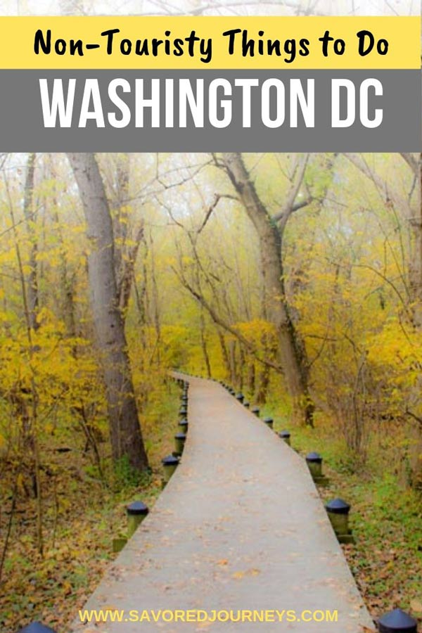 cool things to do in washington dc