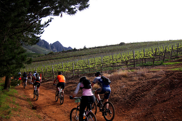 Biking through vineyards