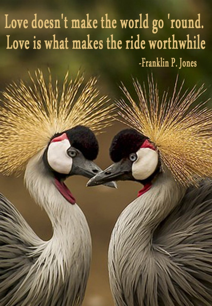 """love birds, """"Love doesn't make the world go 'round. Love is what makes the ride worthwhile."""""""