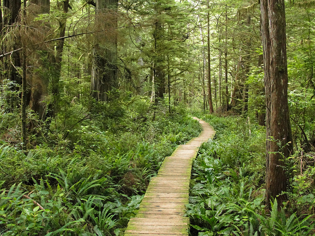 Olympic National Park's Capa Alava trail