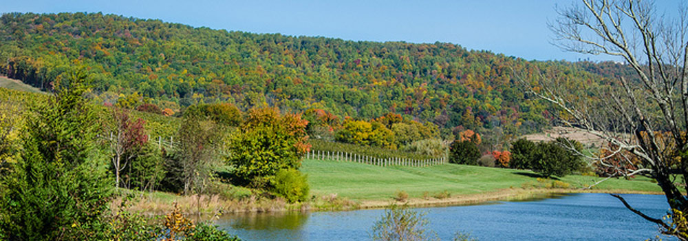 Northern Virginia Wine Region