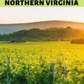 Wine tasting in Northern Virginia