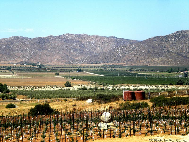 Central Guadalupe Valley wine region