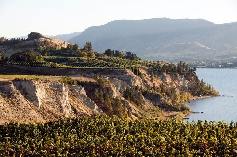 naramata vineyards