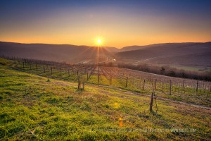 Croatia's Istrian vineyards