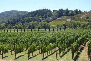 Napa Valley Wine Region
