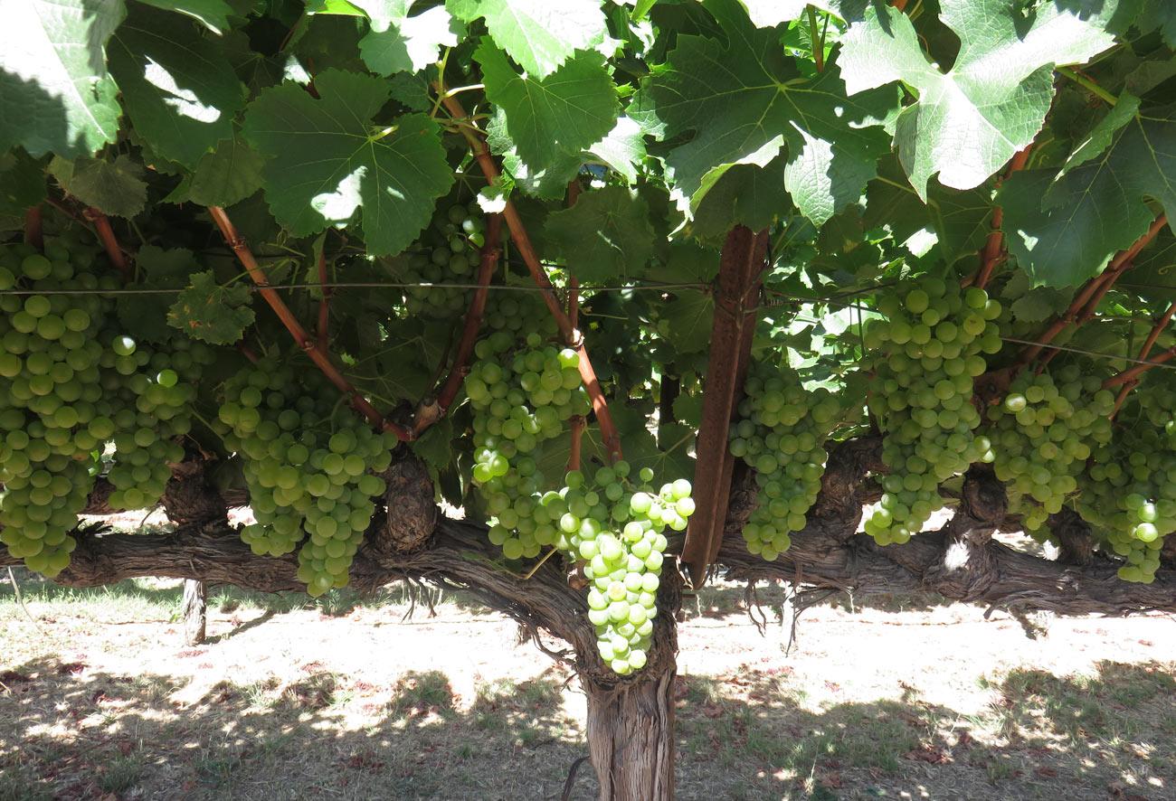 Where to Go Wine Tasting in Sonoma