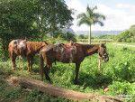 Our faithful horses