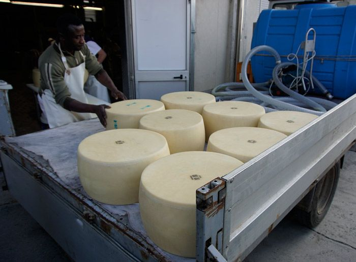 Loading up cheese wheels
