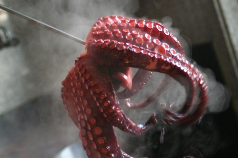 cooking octopus