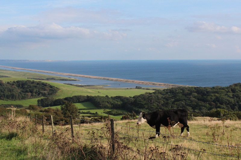 The Dorset coast