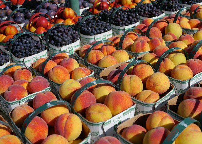 Niagara area peach harvest