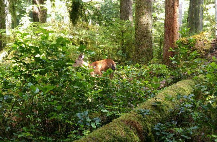 Olympic National Park Rainforest hikes