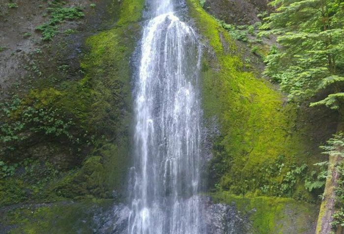 There are at least 6 great waterfall hikes in Olympic National Park