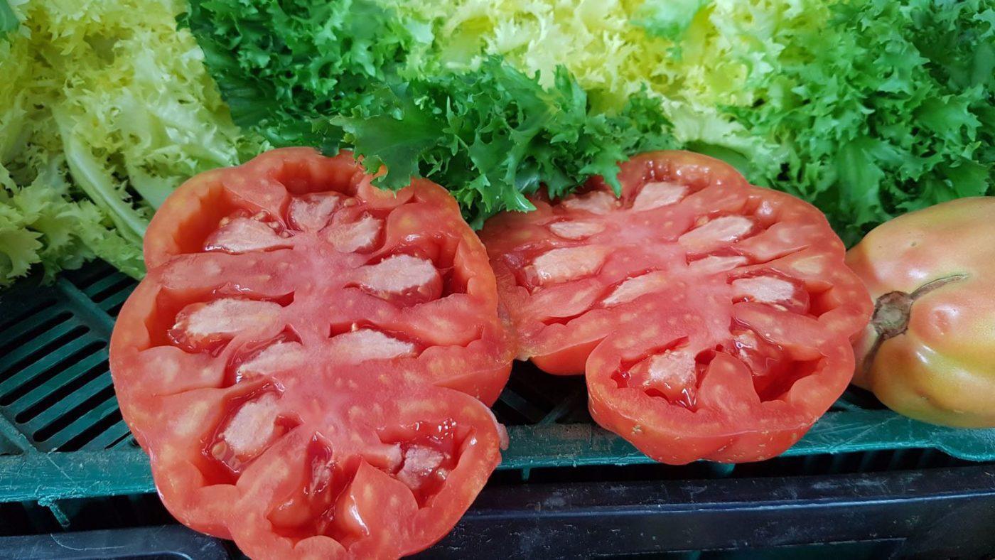 Rosa Ple Tomàquet (Sugar Tomato)