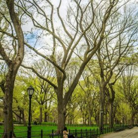Walking through Central Park is a great way to see everything