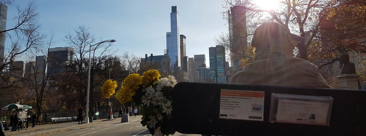 Central Park from the carriage ride