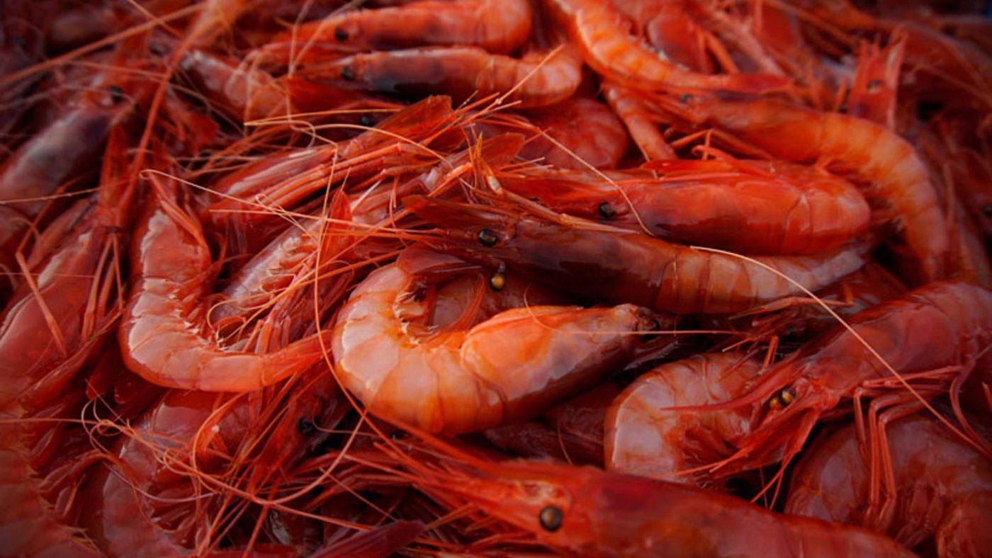 Gambas Rojas (Red shrimp)