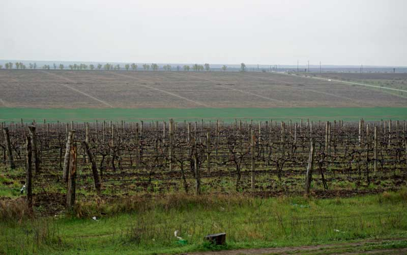 The vineyards of Moldova are set on low lying planes and valleys