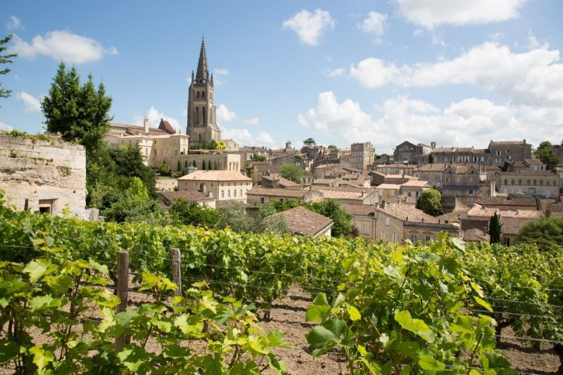 Bordeaux vineyard in France