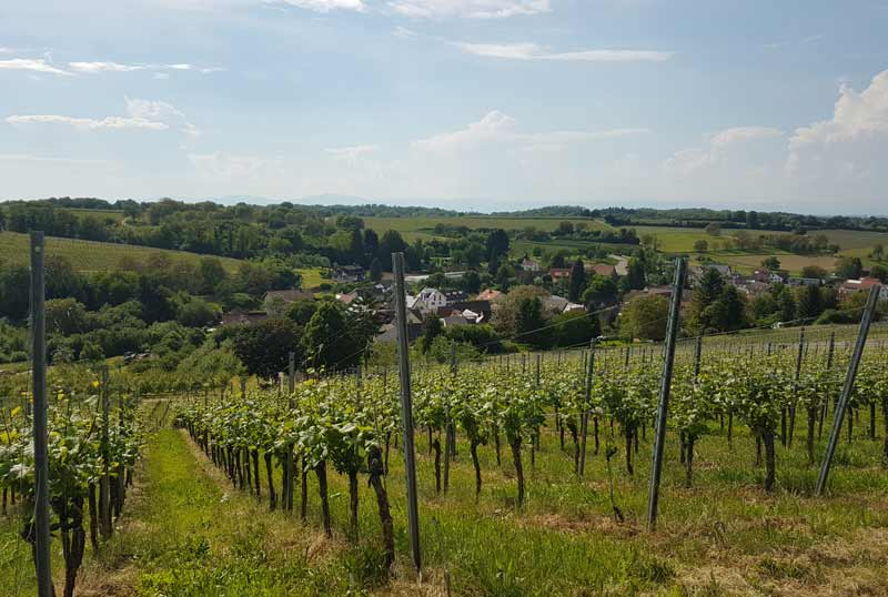 Germany wine country