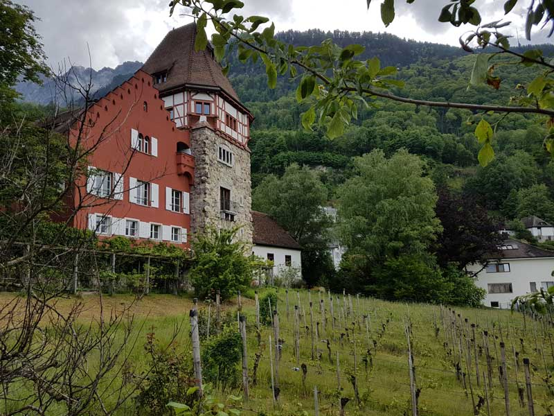 Liechtenstein vineyards