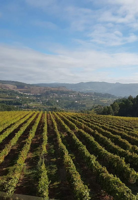 The Duoro Valley Wine Region of Portugal
