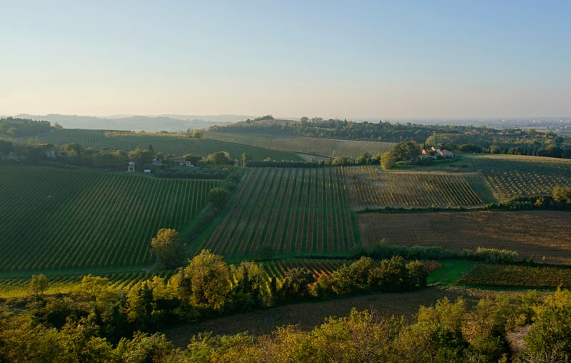 The beautiful rolling hillside vineyards of Romagna