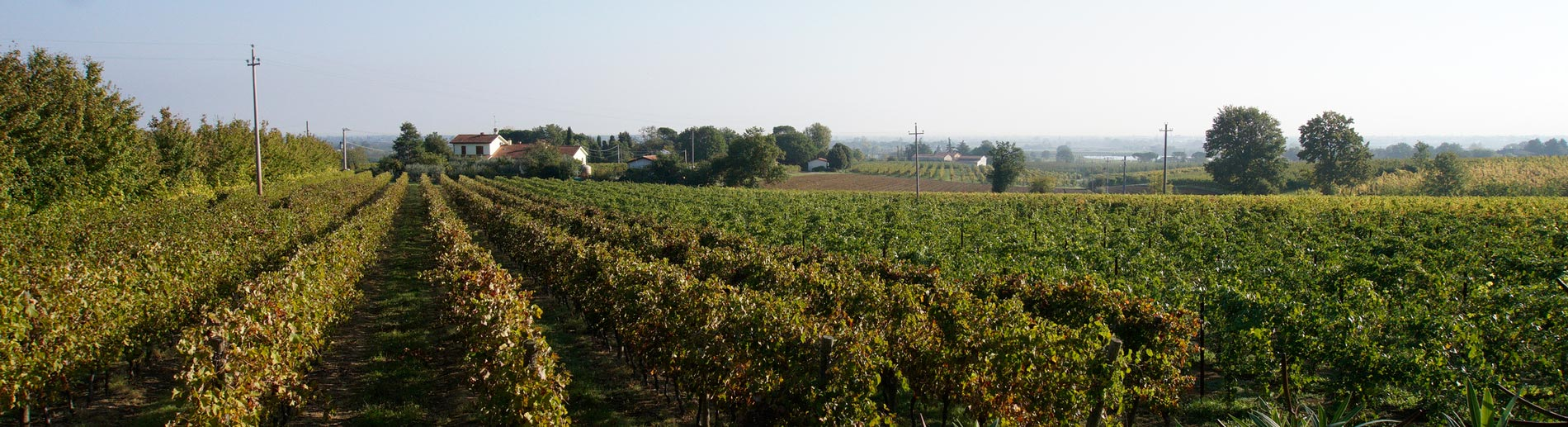 Discover the Romagna Wine Region of Italy
