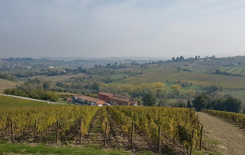 The vineyards of San Patrignano