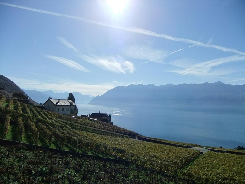 The Lavaux wine region overlooking Lake Geneva in Switzerland