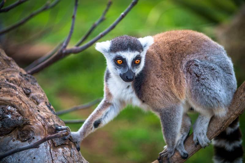 Madagascar Atlantios