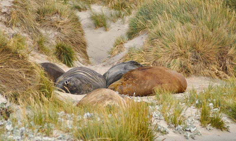 Seals and sealions