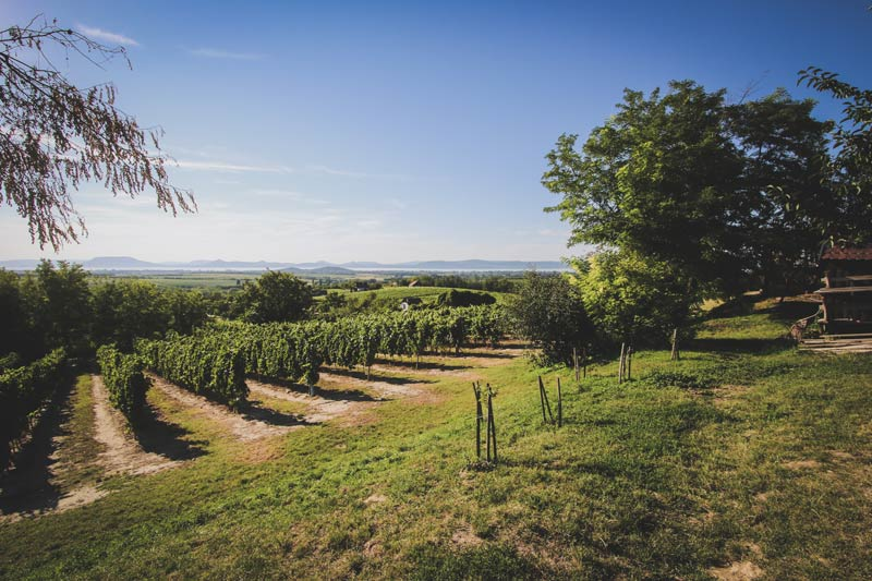 Vineyards near Lake Balaton in Hungary