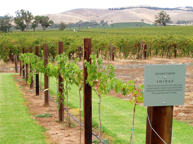 Jacob's Creek Vineyard in Barossa Valley