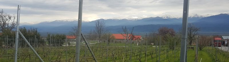 Georgian wine country
