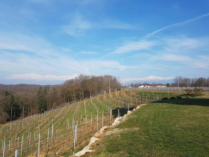 vineyards of alto piemonte