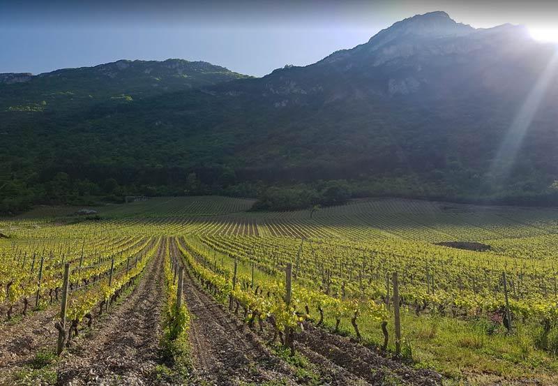 Domaine de la Pierre Bleuev vineyard