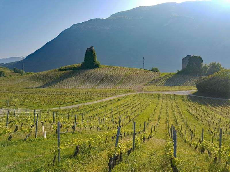 Vineyards of Savoie