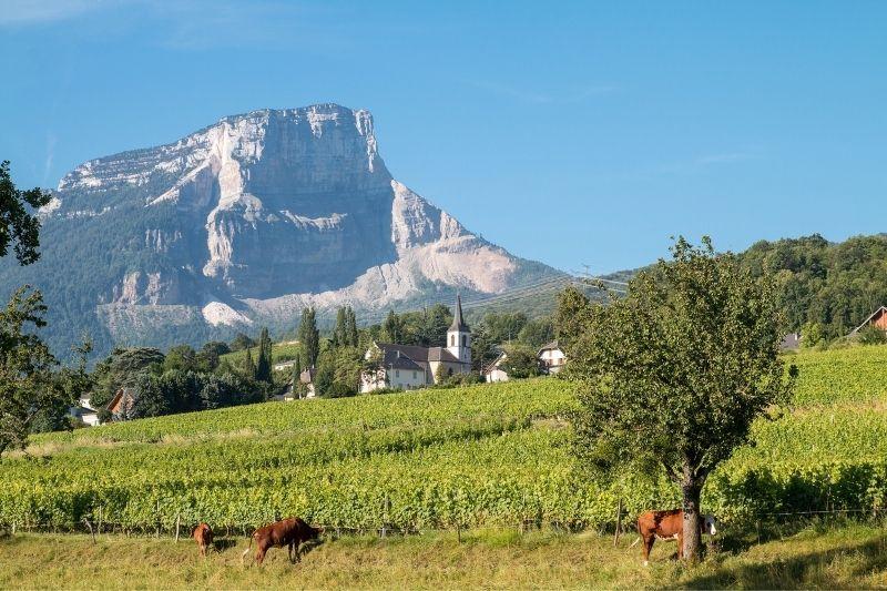 Savoie Wine Region