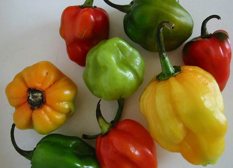 Scotch bonnet chilis