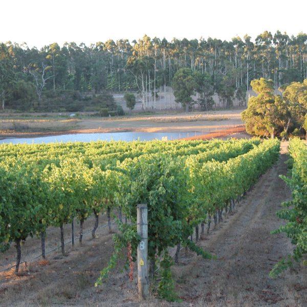 Vineyards around Margaret River