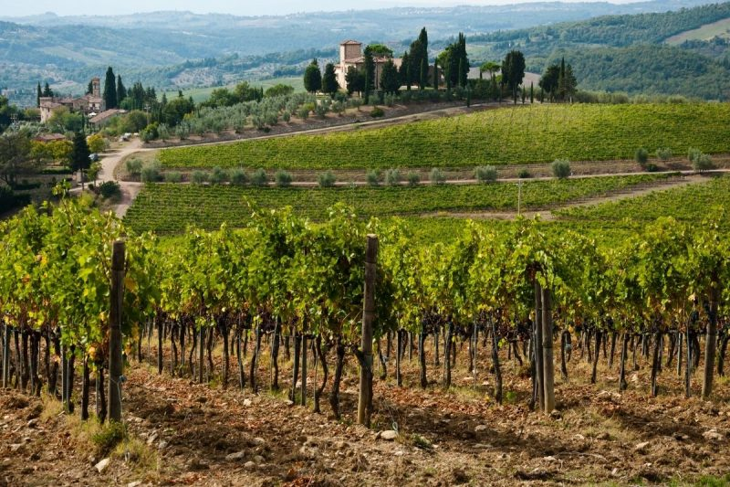 Chianti Winery & Vineyards